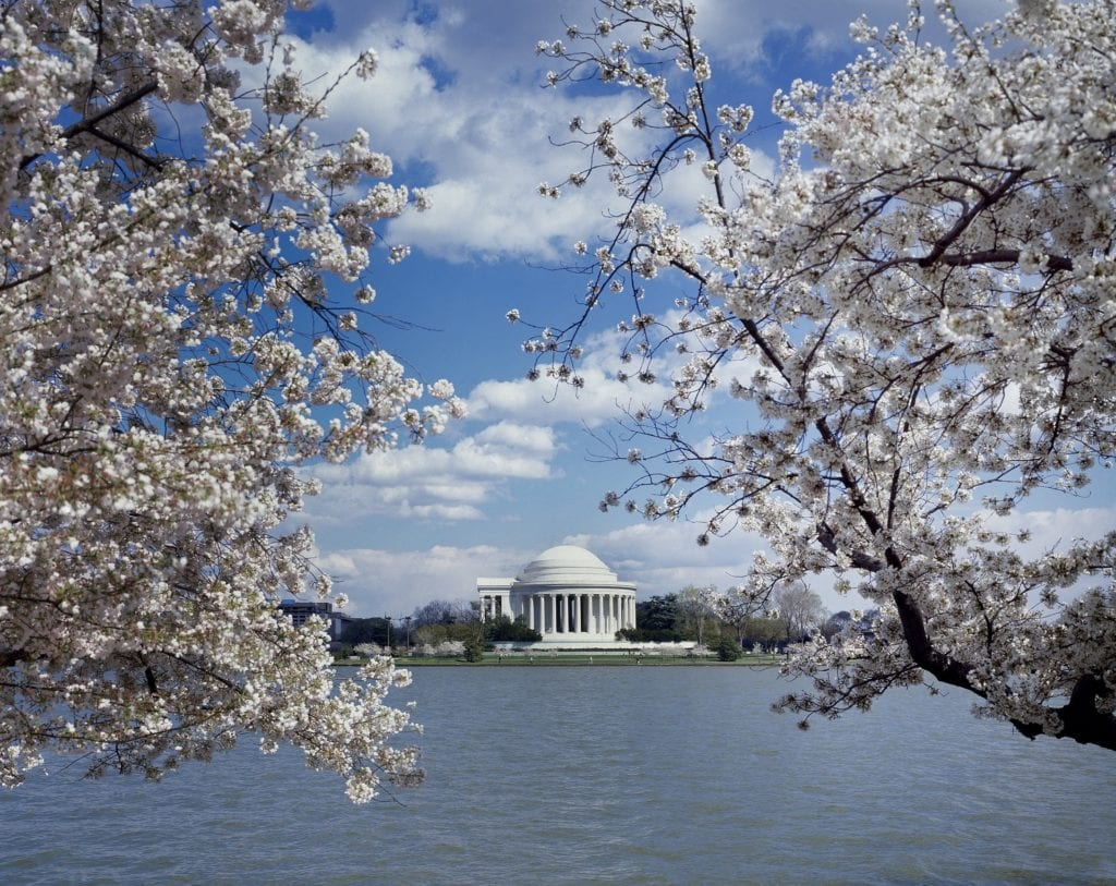 Washington DC during cherry blossom festival